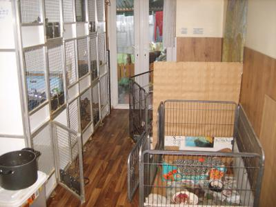 Animal cages in home of unlicensed animal business